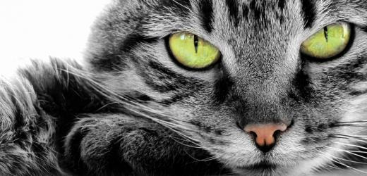 Chraňte své kočičí kamarády včas.